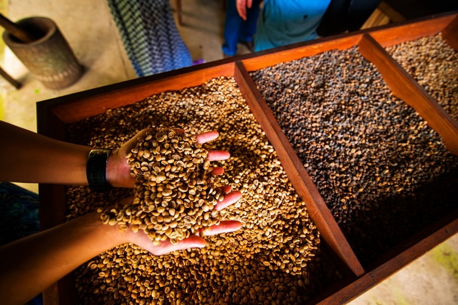 Blockchain Technology Brings Traceability to India's Coffee Producers